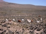 Arequipa et la Canyon de Colca