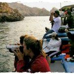 À la découverte des Îles Palomino : loups de mer, pirates et autres curiosités …