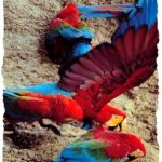 La jungle péruvienne, paradis terrestre